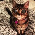 Matilda, la gatta con gli occhi da alieno è una star su Instagram