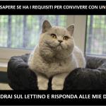 Profilo delle persone che possono convivere con un gatto