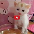 Ben un gattino di tre settimane ha un metodo tutto suo per bere