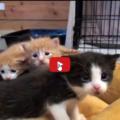 Una giornata insieme a 5 adorabili cuccioli raccontata i pochi minuti