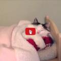 Gatto dome nella sua cameretta