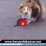 Incredibili immagini ecco cosa fa mamma gatta per impedire che il suo cucciolo venga investito.