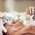 Indizi per capire se tieni più al tuo gatto o agli amici