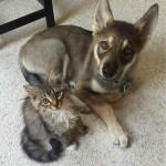 Un cane va in un rifugio per scegliere il suo fratellino.