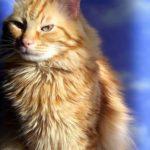 Come il gatto riconosce le nostre malattie