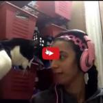 Comunicare con il gatto è  fondamentale