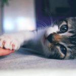 I gatti provano sentimenti confermato scentificamente