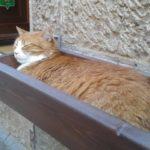 Gatto Arancia: la storia del felino star di Villanova