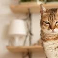 Come riconoscere un gatto geloso