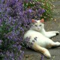 Questo fiore ha ucciso il mio gattino:se avete un micio non tenetelo in casa