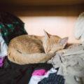 Perché i gatti amano dormire sui tuoi vestiti?
