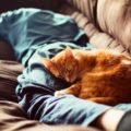 Perché ai gatti piace stare addosso agli umani ?