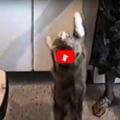 Il gatto che chiama mamma e dispensa bacini per avere cibo