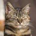 Perché i gatti fanno l'occhiolino ai propri umani?