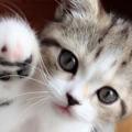 Se non lo tratti così meglio non avere un gatto perché non gli darai la vita che merita