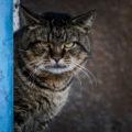 Il gatto non potrà mai dirlo ma non tollera alcune abitudini e atteggiamenti umani