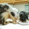 Era malato e volevano sopprimerlo, ma il gatto ha trovato un salvatore