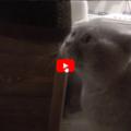 """Giacobbe, il gatto che parla al suo umano: """"Aprimi la porta"""""""