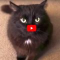 """Prova a dire """"NO"""" a questo gatto"""