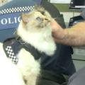 La prima gatta poliziotta in servizio effettivo