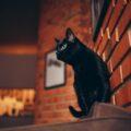 Solo se amato un gatto specie se nero è il migliore talismano vivente, contro le energie negative