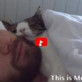 Monty, il gatto con unaalterazione genetica che all'inizio nessuno voleva