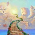 La leggenda del Ponte dell'Arcobaleno 🌈