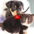 Cuccioli di cane e gatto si incontrano per la prima volta