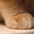Ecco qualche regola per dimostrare rispetto e affetto a un gatto