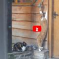 Boby è il suo amico vanno a trovare un vicino