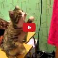 Gatto parla con i gesti