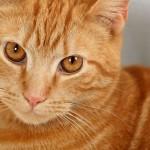 Aroma terapia per i gatti