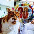 l gatto più vecchio del mondo ha compiuto 30 anni