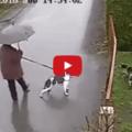 Gatto corre in aiuto del cane di casa  del resto fa parte della sua famiglia