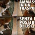 """Gatti costretti a vivere in un trasportino: """"Così il divano non si graffia"""""""