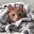 Come capire se il tuo gatto non è completamente felice