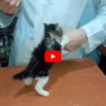 Veterinario non riesce a fare una puntura a un gattino, deve chiamare i rinforzi