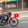 Gatto in moto e anche con il casco felino