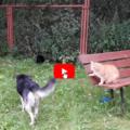Gatto corre in soccorso del suo fratellino, un cane