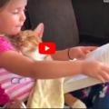 Una bimba legge una storia a un gatto mentre sono in viaggio