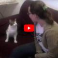 Il mio gatto non ama sentirmi cantare