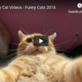 Top Funny Cats Videos 😹
