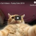 Top Funny Cats Videos 😹