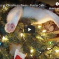 Funny Cats Christmas Compilation