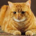 Alcuni comportamenti fanno pensare al tuo gatto che tu non lo ami abbastanza