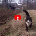 Gatto protegge il suo umano