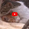 Una commovente storia di amicizia tra due gatti che vivono per strada