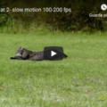 Running cat - slow motion