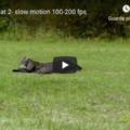 Running cat - slow motion