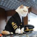 Si chiama Meow Meow Cruise ed è la crociera per gli amanti dei gatti
